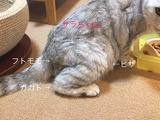 FullSizeRender-18-11-16-01-37