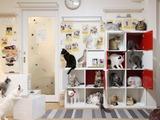 猫カフェPR写真